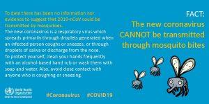 Mosquito bites dont transmit COVID19