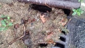 Clogged drain grates create a breeding ground for mosquitoes